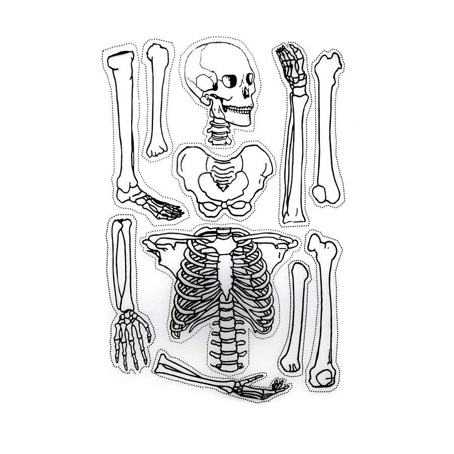 Iskelet Maketi Yapim Seti Seffaf Plastik