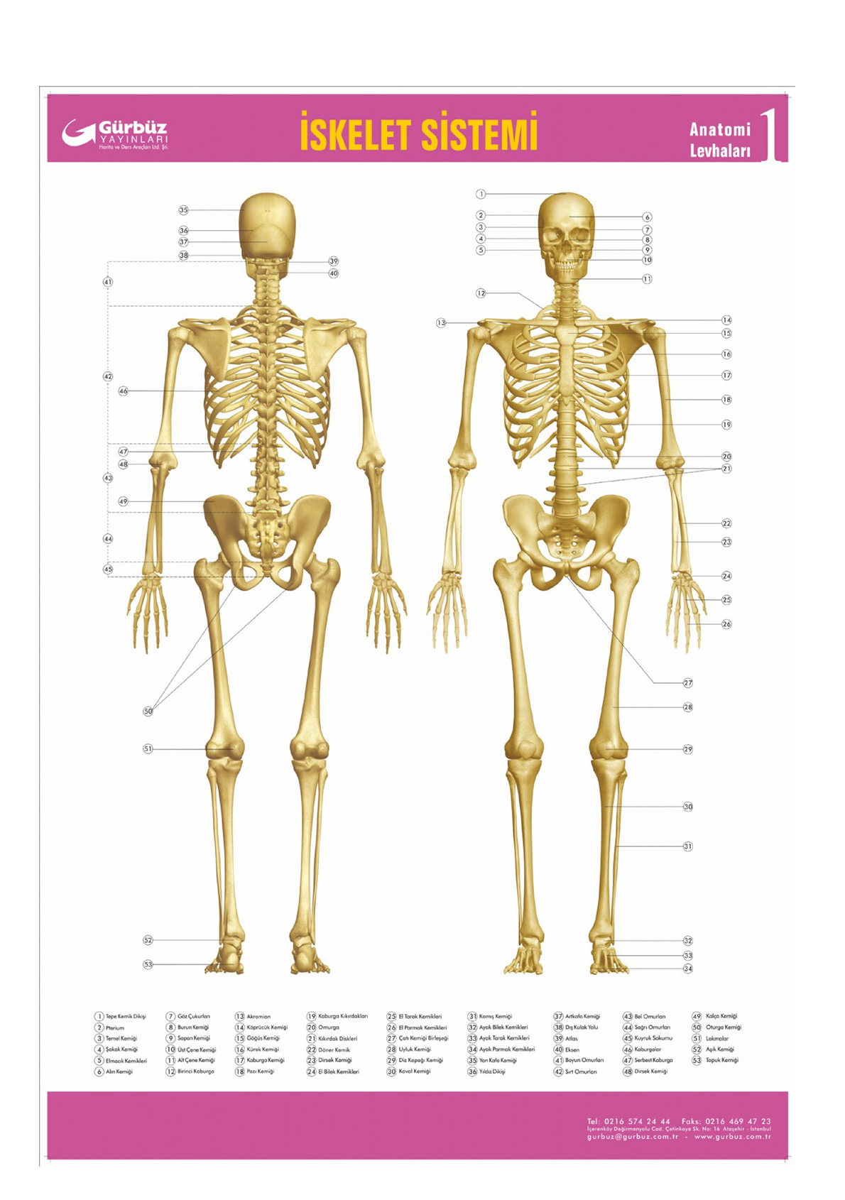 Iskelet Sistemi Levhasi